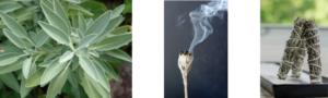 white sage growing, a burning smudge stick and three white sage sticks
